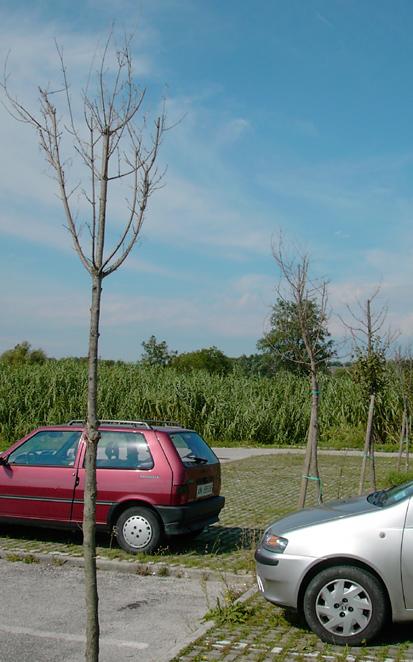 Vegetazione nel parcheggio del centro commerciale