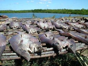 Il pesce preso dai pescatori locali viene conservato tramite l'essiccazione