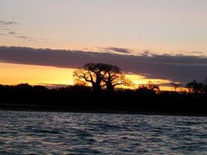 Baobab al tramonto sulla baia di Mtwara