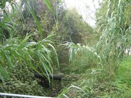 fosso-presso-pista-fiume-misa-3-nov-2008-001